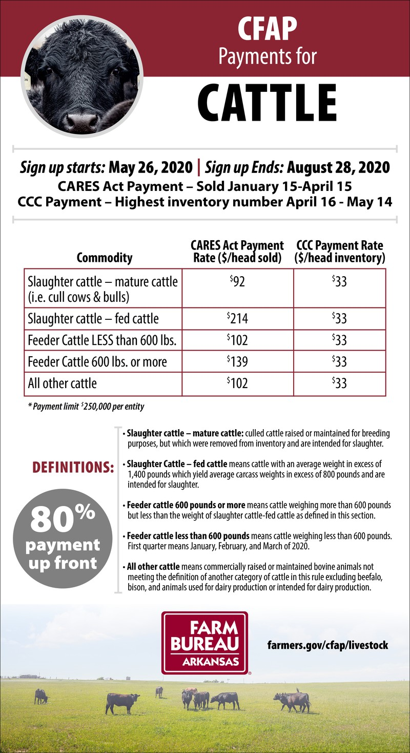 CFAP Payments for cattle infographic