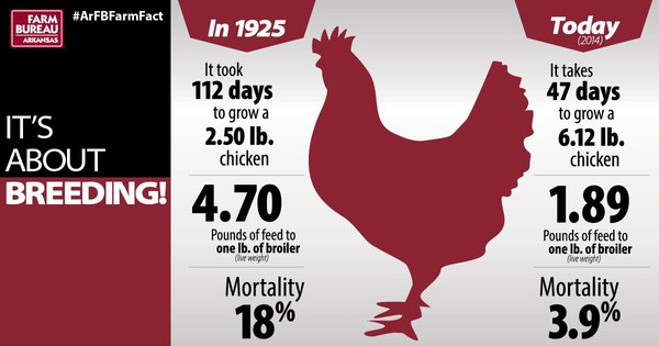 Broiler Facts