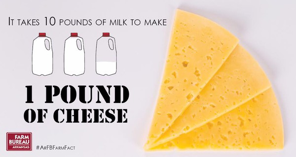 Cheese fact