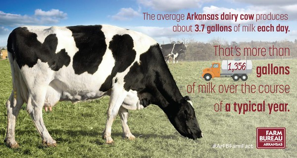 Dairy fact 2