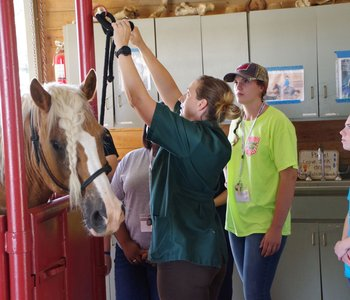 PODCAST: Seeking Future Vets at 4H Vet Science Camp