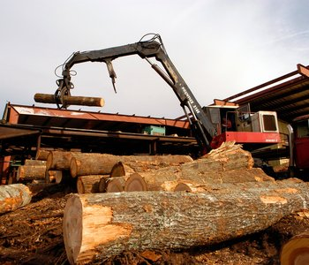 AGCAST: The Weather Impact on Timber