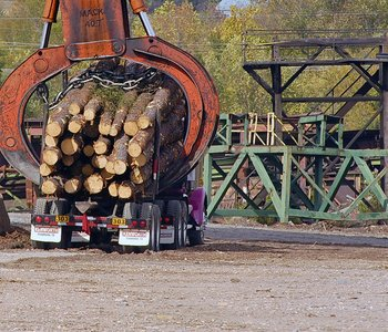 VIDEO: Arkansas Timber Production