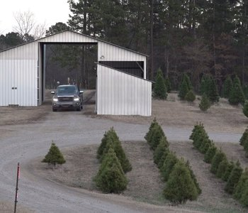 VIDEO: A Christmas Tree Tradition