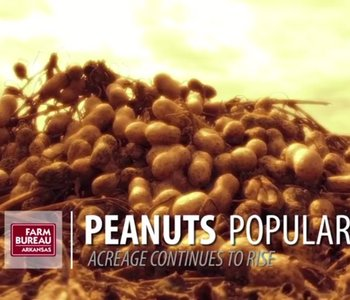 VIDEO: Peanuts Popular Again in 2017