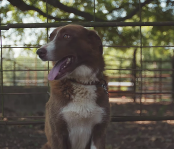 VIDEO: Dog Day on the Farm