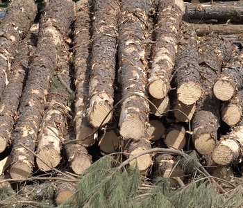 VIDEO: Timber Industry Trouble?