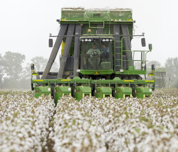 VIDEO: Here Comes the Cotton