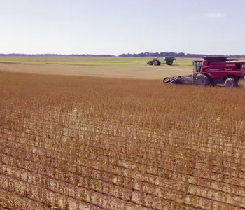 VIDEO: Harvesting Soybeans
