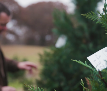 VIDEO: Growing a Christmas Tree Tradition