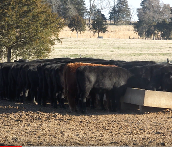 VIDEO: A Livestock Tradition Continues at Big D Ranch