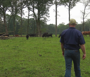 VIDEO: Vet Continues Family Farming Legacy with Wholly Cow