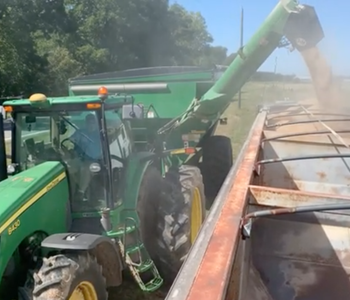 VIDEO: Conway County's Stobaugh Offers Harvest Update