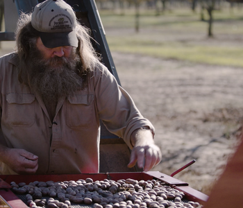 VIDEO: A History of Pecans with Billy Wilchman