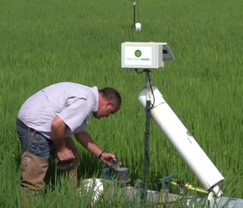 The Internet of Rice: Conservation Through Tech