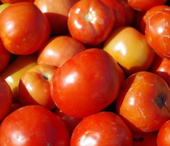AGCAST: 2018 Tomato Production